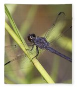 Dragonfly - Little Boy Blue Fleece Blanket