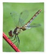 Dragonfly On A String Fleece Blanket