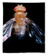 Drosophila With Dichaete Wings Fleece Blanket