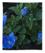 Dwarf Balloon Flower Platycodon Astra Blue 2 Fleece Blanket