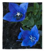 Dwarf Balloon Flower Platycodon Astra Blue  Fleece Blanket