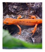Easterm Newt Nnotophthalmus Viridescens 10 Fleece Blanket
