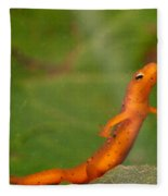 Easterm Newt Nnotophthalmus Viridescens 20 Fleece Blanket
