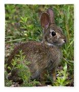 Eastern Cottontail Rabbit Dmam005 Fleece Blanket
