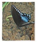 Eastern Tiger Swallowtail 8537 3215 Fleece Blanket