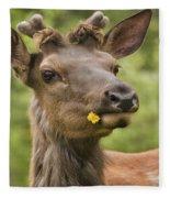Elk Cervus Canadensis With Dandelion In Fleece Blanket