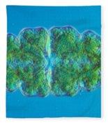 Euastrum Sp. Algae Lm Fleece Blanket