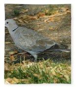 Eurasian Dove Fleece Blanket
