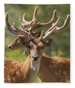 Fallow Deer Dama Dama Stags Fleece Blanket
