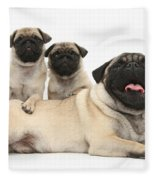 Fawn Pugs, Mother And Pups Fleece Blanket