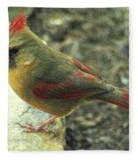 Female Northern Cardinal Fleece Blanket