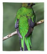 Female Resplendent Quetzal - Dp Fleece Blanket