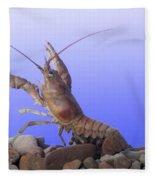 Female Rusty Crayfish Fleece Blanket