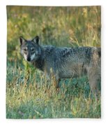 Femle Gray Wolf In The Morning Light Fleece Blanket
