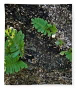 Fern And Coquina Fleece Blanket