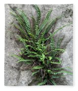 Fern Growing From Crack In Limestone Fleece Blanket