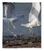 Fighting Gulls Fleece Blanket