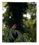 Finch In The Willow Fleece Blanket