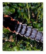 Firefly Larva Fleece Blanket