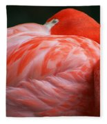 Flamingo Taking A Snooze Fleece Blanket