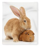 Flemish Giant Rabbit With Red Guinea Pig Fleece Blanket