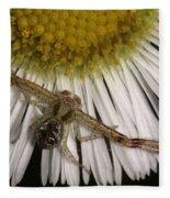 Flower Spider On Fleabane Fleece Blanket