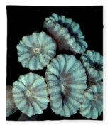Fluorescent Coral In In White Light Fleece Blanket