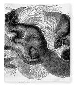 Flying Squirrel Fleece Blanket