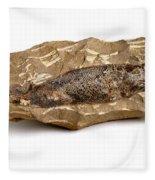 Fossilized Fish Fleece Blanket