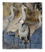 Four Sandhill Cranes Fleece Blanket