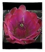 Framed Fuchsia Cactus Flower Fleece Blanket