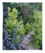 Fresh Young Redwoods On Mt Tamalpais Fleece Blanket