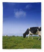 Friesian Cow Grazing In A Field Fleece Blanket