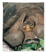 Galapagos Giant Tortoise Fleece Blanket