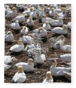 Gannets Showing Fencing Behavior Fleece Blanket