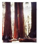 Giant Sequoia Fleece Blanket