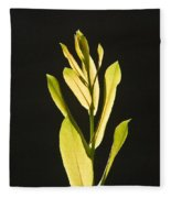 Glorious Willow Aglow Fleece Blanket