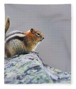 Golden-mantled Ground-squirrel Fleece Blanket