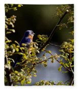 Good Morning Sunshine - Eastern Bluebird Fleece Blanket