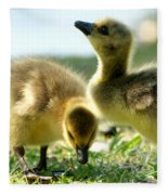 Goslings 6 Fleece Blanket