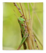 Grasshopper In Green Fleece Blanket