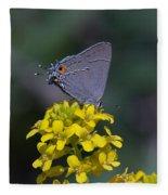 Gray Hairstreak Butterfly Din044 Fleece Blanket