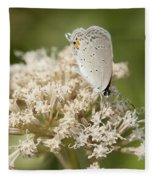 Gray Hairstreak Butterfly On Milkweed Wildflowers Fleece Blanket