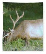 Grazing Bull Elk  Fleece Blanket