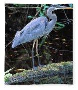 Great Blue Heron, Florida Fleece Blanket