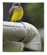 Grey-capped Flycatcher Fleece Blanket