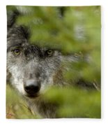 Grey Wolf, Outside Golden, British Fleece Blanket