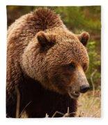 Grizzly Bear, Yukon Fleece Blanket