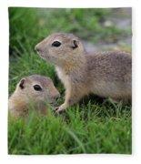 Ground Squirrels, Oak Hammock Marsh Fleece Blanket