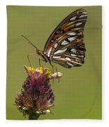 Gulf Fritillary Butterfly - Agraulis Vanillae Fleece Blanket
